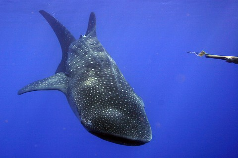Come and swim with these amazing creatures!
