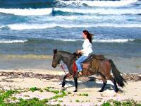Horseback Beach Rides